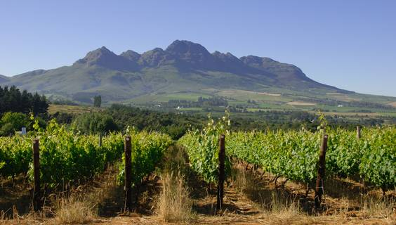 © Wines of South Africa
